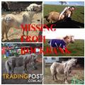 Wanted: MINIATURE COLT MISSING IN ROCKBANK