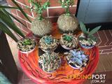 Potted Succulents and Kokedamas