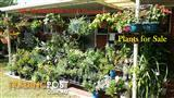 Garden Plants for all --- weekends