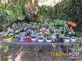 Succulents and Bromeliads