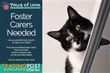 Cat & Kitten Foster Carer Needed for Paws of love Animal Rescue