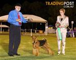 Airedale Terrier Pedigree pups from Australian Champion!