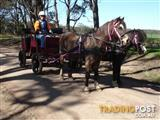 Horse drawn Buggy 4 wheel 4 shaft