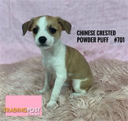 Find Puppies, Kittens and other pets for sale | Tradingpost Australia