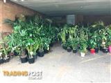INDOOR AND OUTDOOR PLANT SALE