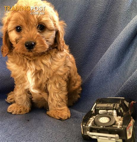 Puppy power dandenong