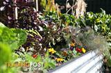 FACTORY DIRECT! Raised Garden Veggie Beds, Planter Box, Herbs