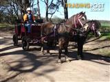 Horse/pony buggy