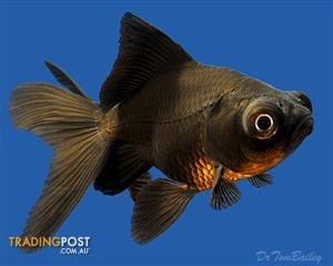 Find fish items for sale in Australia