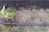Used irrigation drip tape