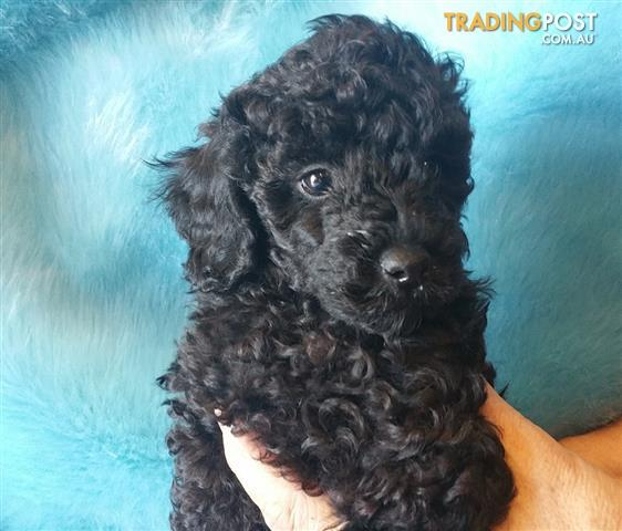 Free Puppies And Dogs In Melbourne