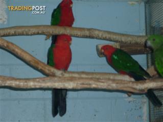 Find birds for sale in Australia