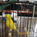 Shaw birds