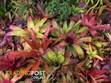 BROMELIADS......PUT SOME COLOUR BACK INTO YOUR LIFE
