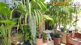 Massive plant sale!! Huge variety of plants at great prices!