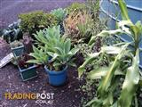 VERY MATURED PLANTS FOR SALE AND GOOD WORKING WAS/MACH.TROWN IN