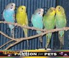 25% Off all birds in store while available - All birds must go
