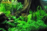 YXY1 Live Plants, Aquarium & Ponds (5 for $30 Special)