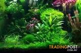 YXY2 Create a Beautiful Aquarium in your home 2