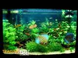YXY2 Create a Beautiful Aquarium in your home 1