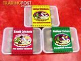 YXY2 FOOD - Meal Worms / Crickets - 3 tubs for $20