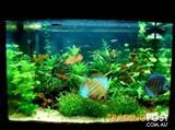 YXY2 Create a Beautiful Aquarium in your home 3