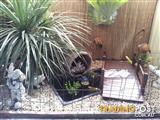 fish pond and water feature