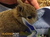 46 ADORABLE BABY BUNNIES!!!!!!!