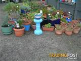PLANTS IN POTS FOR SALE