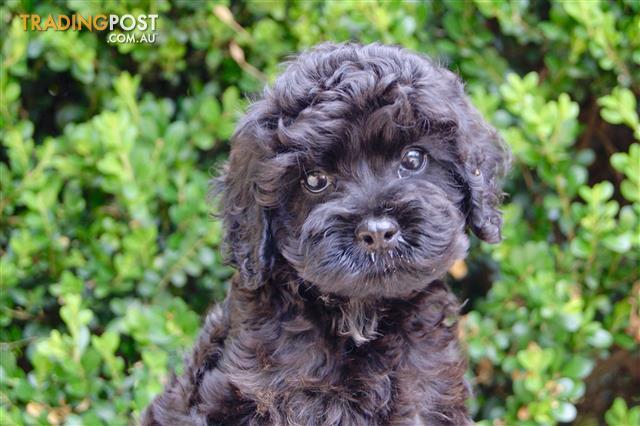 Dog Coats For Sale Adelaide