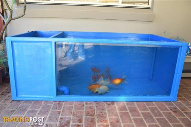 Koi fish pond fibreglass for sale in cranebrook nsw koi for Koi pool for sale