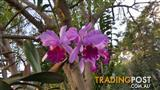 Orchids - variety