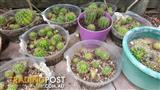 Catus Plants
