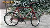 Indi 500 legend mountain bike