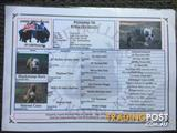 British Bulldog x Aussie Bulldog