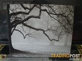 WINTER TREES IN SNOWY PARK 60X50CM MASS PRODUCED PAINTED ART WORK WALL DECORE DECORATION