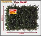 Dwarf / Mini Mondo Grass - Trays of 250+ Free Express Post