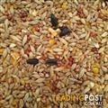 Cracked Tic Beans  25 kg