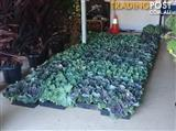 Amazing $1 Plant Sale