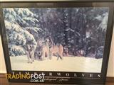 Timber Wolves Framed Picture
